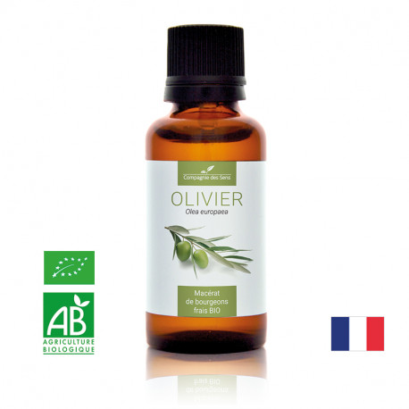 OLIVIER - Macérat de bourgeons BIO