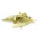 Tilleul (Bractées) BIO - Plante en vrac pour infusion
